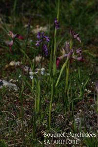 Bouquet d'orchidées rares