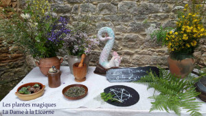 Les-plantes-magiques-fk